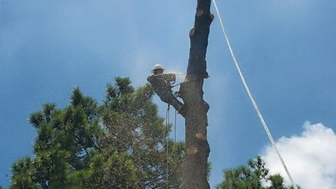Longview Tree Services Tree Removal Amp Trimming Care